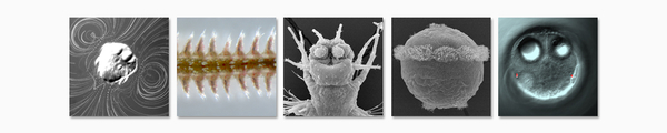 Banner - Neurobiology of Marine Zooplankton